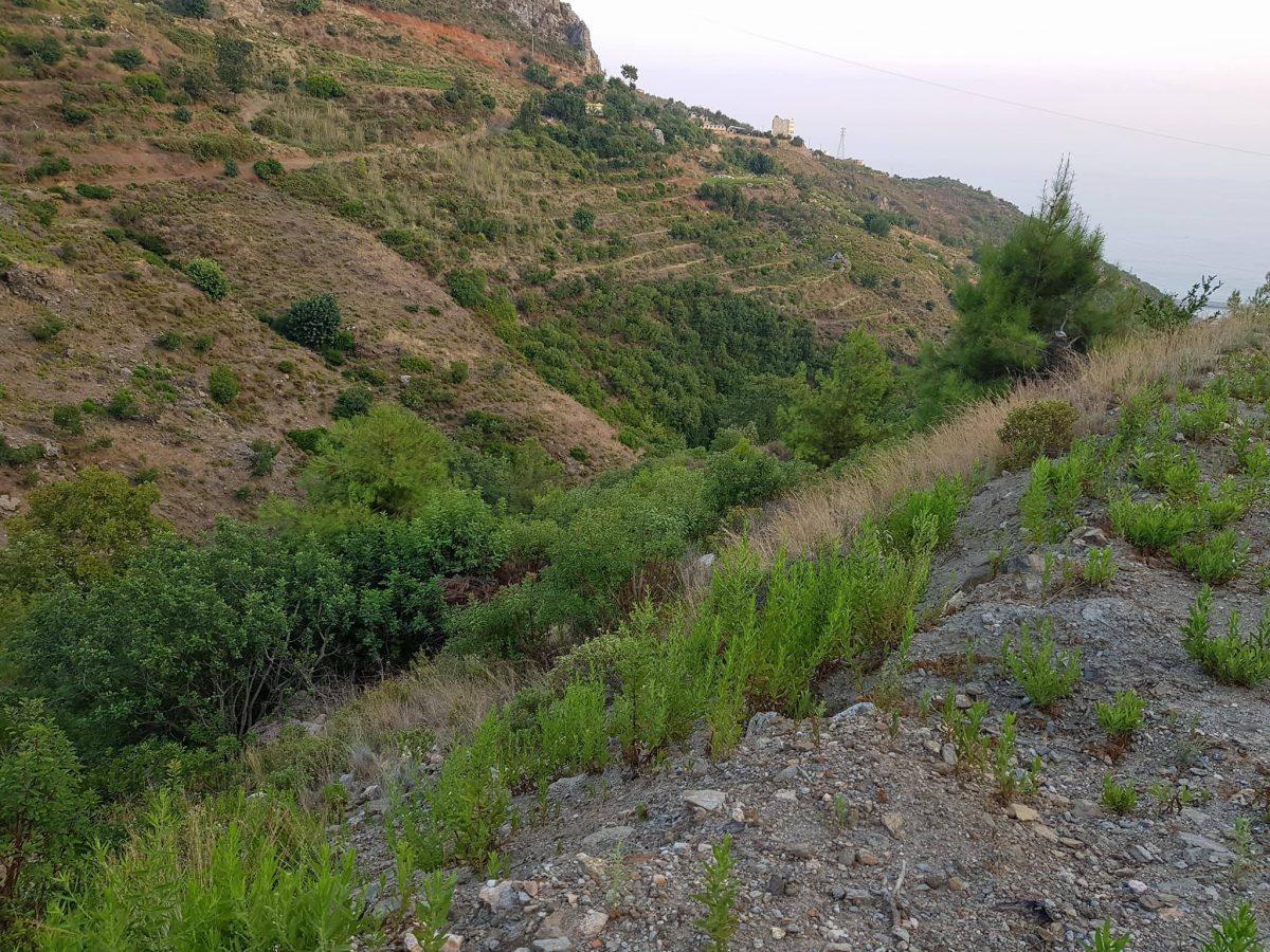 Земельный участок для развития сельского хозяйства - Фото 4