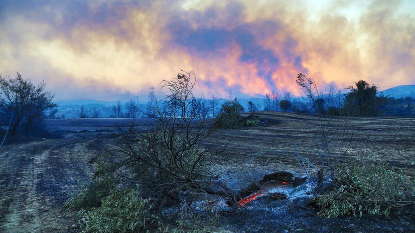 В Турции начали восстанавливать пострадавшие от пожаров леса